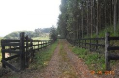 Fazenda Eucalipto 110 alqueires – Guapiara/SP